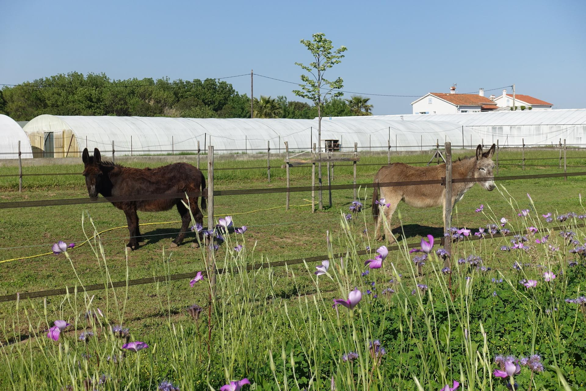 Nos deux ânes