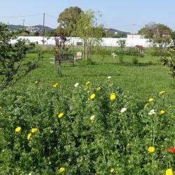 Jardin, poulailler et balançoire